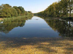 Canal de la Martinière, la Loire, réserve, oiseaux