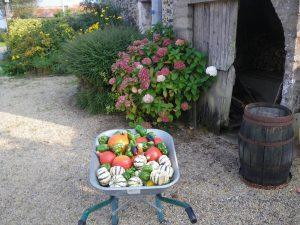 Produits bio, Récolte du potage au Gîte des Templiers