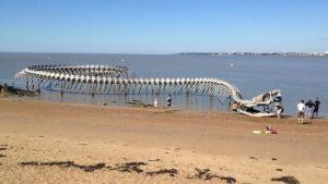 Le serpent de mer, sur la plage à Saint Brévin
